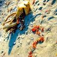 砂浜 流木 海藻 小石
