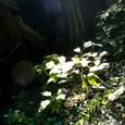 廃村 木漏れ日と葉