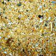 珊瑚の混じる砂浜