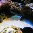 魚と珊瑚礁